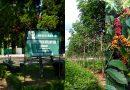 Target Produksi Karet 1837 Ton dan Kopi 731 Ton PTPN IX Kebun Getas Terpenuhi