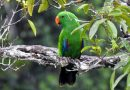 10 Satwa Liar Kembali Dilepas ke Habitat Alami di Papua
