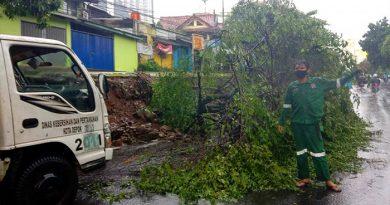 Halangi Badan Jalan, Satgas DLHK Depok Evakuasi Pohon Tumbang Akibat Hujan Lebat